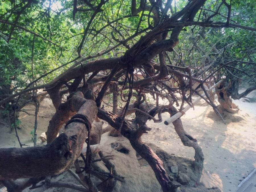 The Trees That Turns Into Gopis At Night